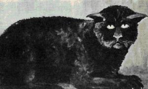 The Black Cat of Killakee House